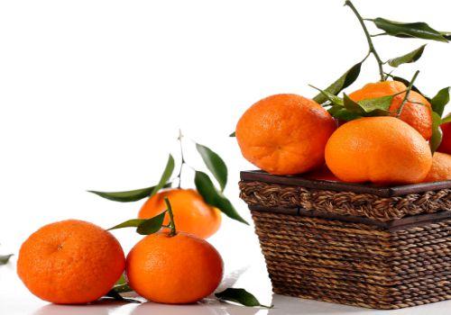 柑橘园间种植管理方法介绍!